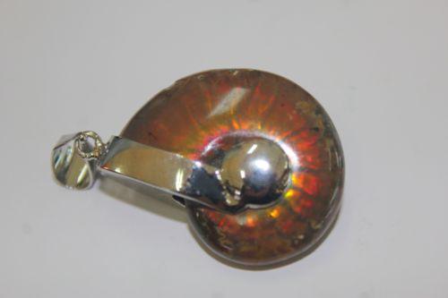 จี้ฟอลซิลแอมโมไนต์ ( Ammonite )