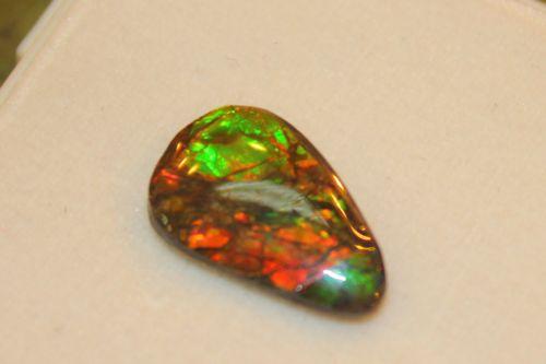 แอมโมไนต์โอปอล ( Ammonite Opal )