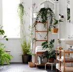 แต่งห้องน้ำแบบธรรมชาติด้วยต้นไม้