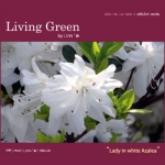 Living Green : Lady in white Azalea (SPA สปา บรรเลง )
