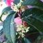 ชาหอมหมื่นลี้ (Horm MoUn Lee Tea) thumbnail 2