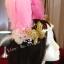 MAI26 มงกุฎขนนก ผี้เสื้อทองโบว์ (งาน handmade)**สินค้ามีจำกัด** thumbnail 5