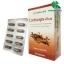 Herbal One Cordyceps Plus ตังถั่งเฉ้า พลัส โปร 1 ฟรี 1 SALE 60-80% thumbnail 1