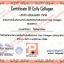 Colly Collagen คอลลี่ คอลลาเจน 10,000 mg 15 ซอง โปร 1 ฟรี 1 SALE 60-80% thumbnail 2
